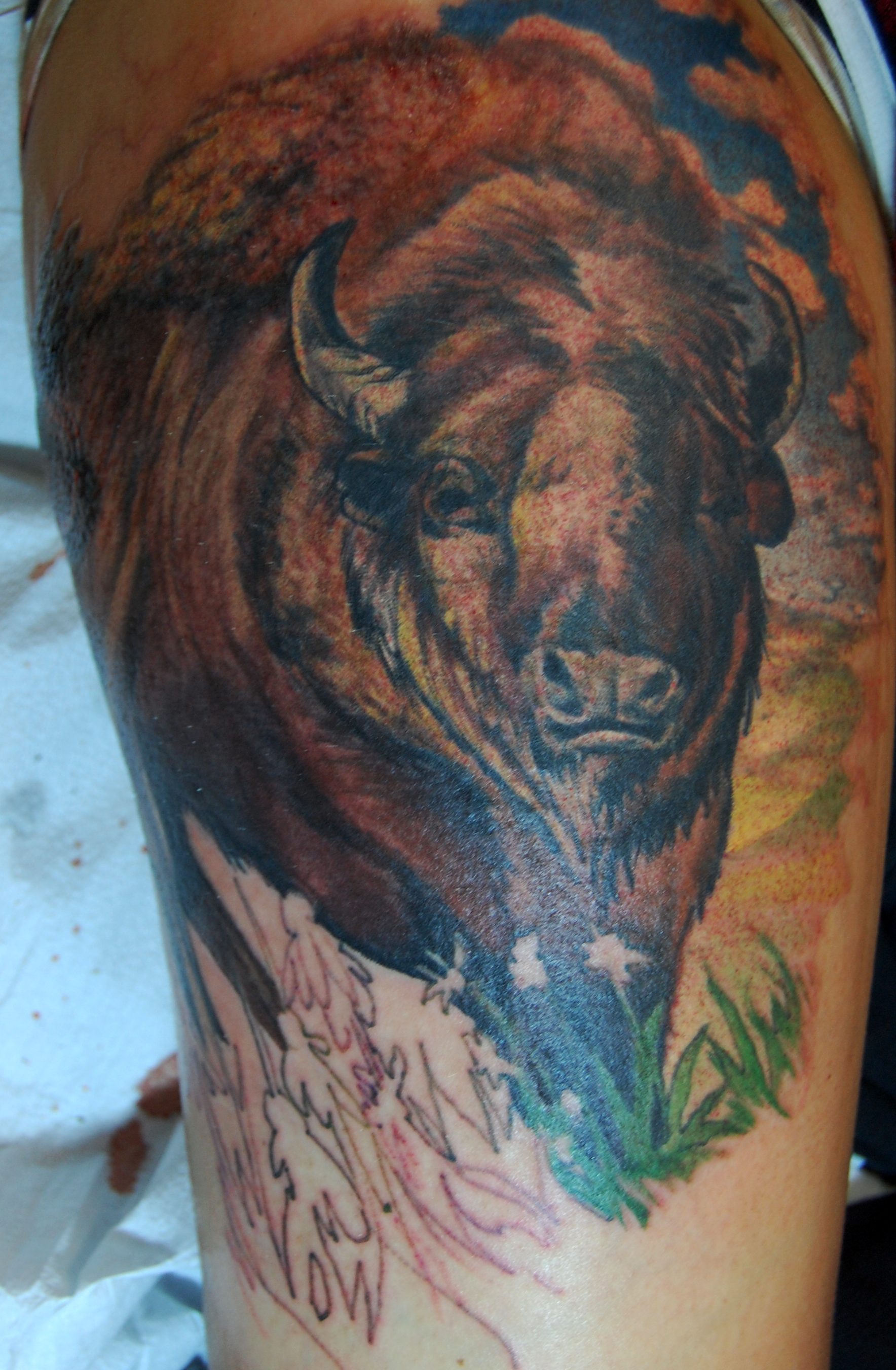Bison head tattoos for Tattoos of buffaloes