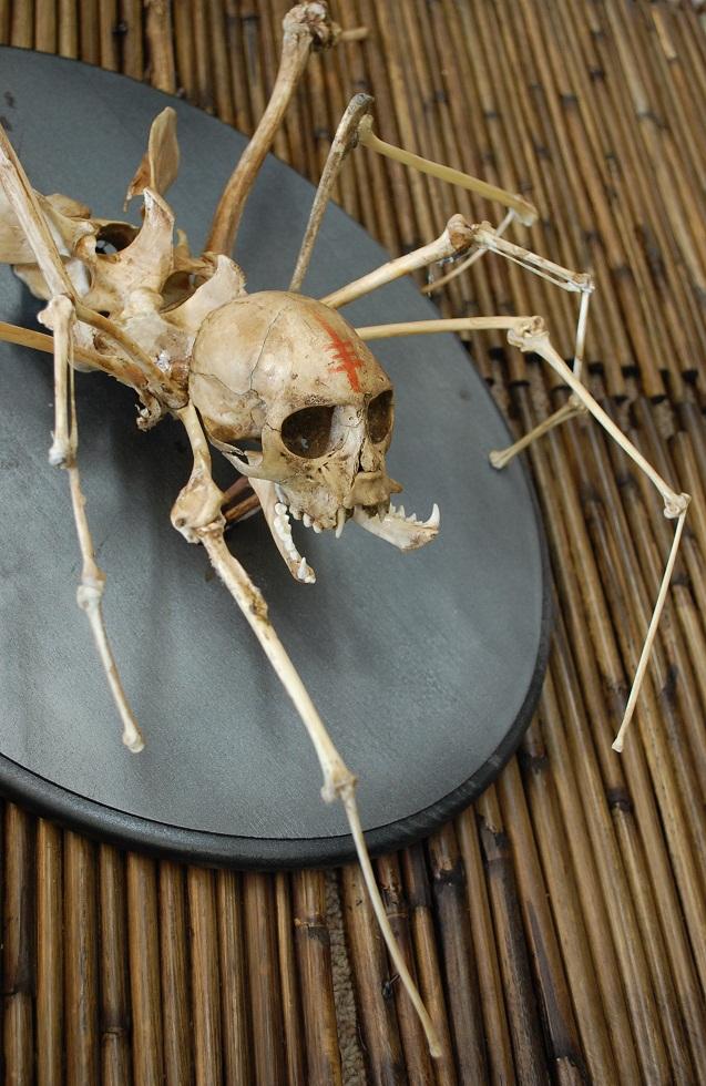 creepy nightmare spider monkey skeleton