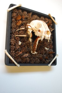 taxidermy skull mount with sweetgum