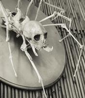 spiderbones