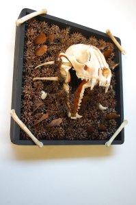 thorn box raccoon skull mount ResonantEye – Spokane Tattoo