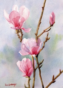 Pink-Magnolias-watercolour-painting-by-Joe-Cartwright-743x1024